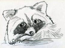 Sad little raccoon. Hand drawn pencil sketch of a little and sad raccoon cub Royalty Free Stock Photo