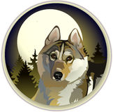 Sad lone wolf. Vector - a sad lone wolf in the woods Stock Photography