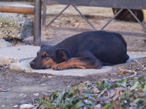 Sad and lonely dog lay down on the ground stock images
