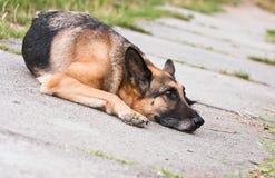 Sad lonely dog lies on asphalt plates Stock Image