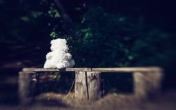 Free Sad Lonely Teddy Bear And Bench In The Old Garden Royalty Free Stock Photography - 120871647
