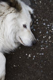 Sad look. The sad look of the dog in the street royalty free stock image