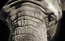 Sad look of Elephant royalty free stock photo