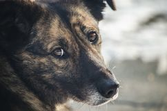 Sad look of a homeless dog Royalty Free Stock Photography