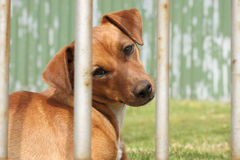 Sad looking dog Stock Photography