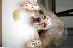 Sad Looking Dog Stock Photos