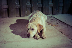 Sad looking dog on the street in  lantern light Royalty Free Stock Photography