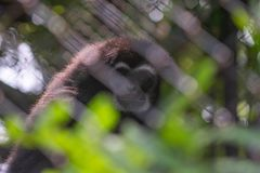Caged monkey royalty free stock photography