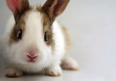 Sad-looking rabbit. A little bunny that looks scared royalty free stock photos