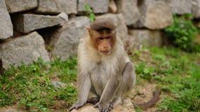 Sad macaque Royalty Free Stock Photos