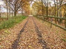 Sad melancholy fall day with sun hidden in thick clouds. Autumn alley in a city park strewn with yellow autumn leaves, autumn stock photos