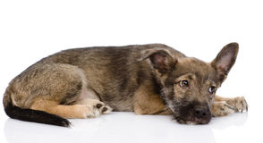 Sad mixed breed dog.  on white background Stock Photography