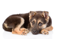 Sad mixed breed puppy dog looking at camera. Royalty Free Stock Photo