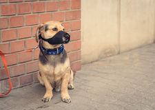 Sad mongrel dog waiting for owner. In the street Royalty Free Stock Photos