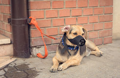 Sad mongrel dog waiting for owner. In the street Royalty Free Stock Photography
