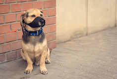 Sad mongrel dog waiting for owner. In the street Stock Photos