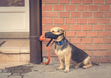 Sad mongrel dog waiting for owner. In the street Stock Photo