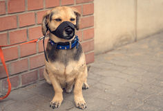 Sad mongrel dog waiting for owner. In the street Stock Images
