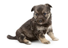 Sad mongrel puppy Stock Photo