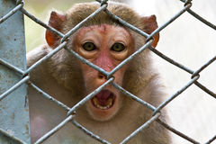 Sad monkey Stock Image