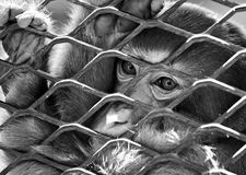Sad monkey in cage Stock Photos