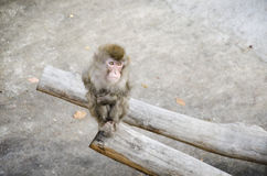 Sad Monkey in a cage Royalty Free Stock Photography