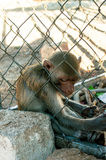 Sad monkey in cage Royalty Free Stock Images