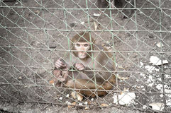 Sad monkey inside a cage Royalty Free Stock Photo