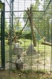 Sad monkey Stock Image