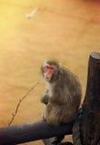The sad monkey. Royalty Free Stock Images
