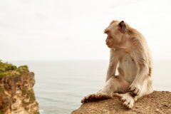 Sad monkey sits on the rock on Bali island and  thinks and looks. In empty space Stock Photo