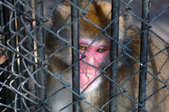 Sad monkey sitting in prison. In zoo stock photo