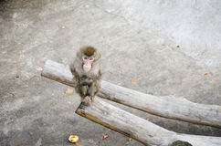 Sad monkey Stock Photography