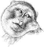 Sad monkey Royalty Free Stock Image