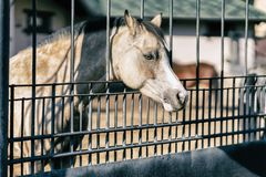 Sad muzzle of a horse behind a metal fence, lattice. Sad cute muzzle of a horse behind a metal fence, lattice in sunny day royalty free stock image