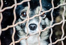 Sad old dog in the cage of the shelter for homeless animals Stock Photography