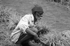 A sad old man working as gardner. Poor old senior man works cut grass with hand scissor in a lawn with hard manual labor work in India royalty free stock photos