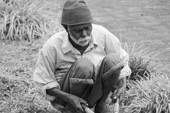 A sad old man working as gardner. Poor old senior man works cut grass with hand scissor in a lawn with hard manual labor work in India royalty free stock images