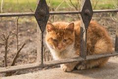 Sad stray cat. Sad orange stray cat sitting outdoors. Lost or abandoned pet stock photography