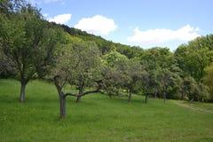 Sad owocowi drzewa Zdjęcie Royalty Free