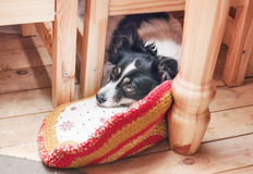 Sad pet dog under table royalty free stock photo
