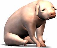 Sad Pig Stock Images