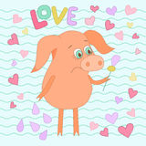 Sad pig with a flower in a hand. Cute piggy in cartoon style. On from wavy lines and hearts. Word love is hand drawn Royalty Free Stock Images