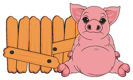 Sad pig sit Stock Image