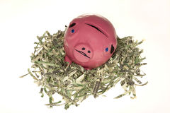 Sad piggy bank in nest of shredded money. Piggy bank in nest of shredded money on white background , financial problems concept Royalty Free Stock Image