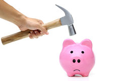 A sad pink piggy bank. Is about to be hit by a hammer Stock Image