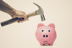 A sad pink piggy bank. Is about to be hit by a hammer in old vintage tone Stock Photos