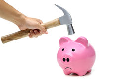 A sad pink piggy bank. Is about to be hit by a hammer in old vintage tone Royalty Free Stock Photo