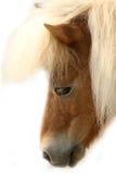 SAD ponny Royaltyfri Bild
