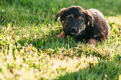 Sad pooch on the grass Royalty Free Stock Photo